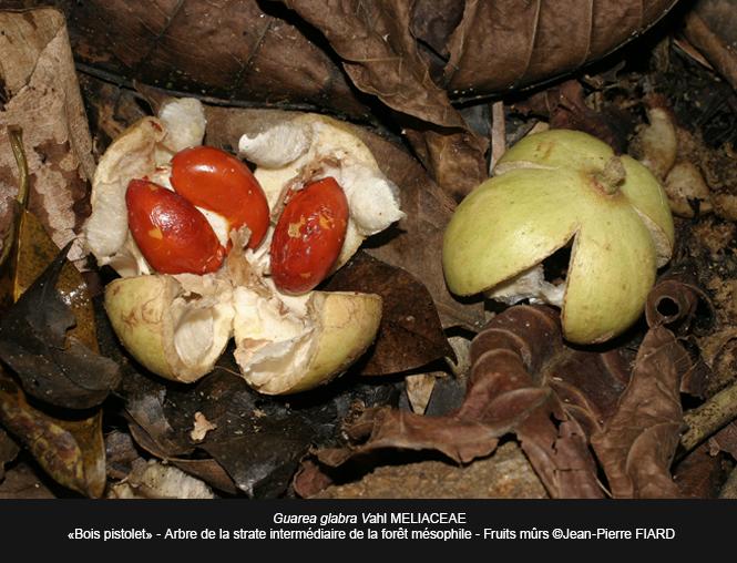Bois-pistolet-fruits